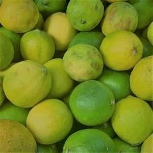 Limes Loose