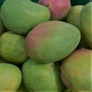 Mango Loose