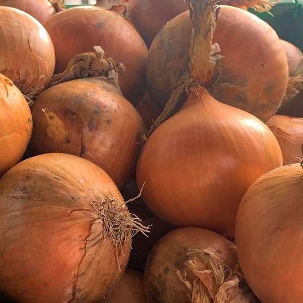 Brown Onion Loose