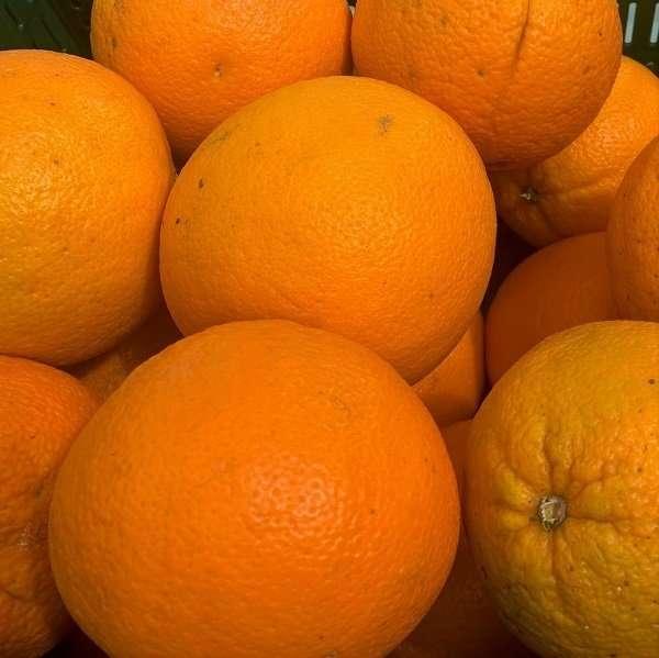 Oranges Loose
