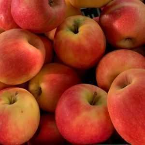 Apples Loose