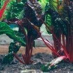 Organic Veg Shop